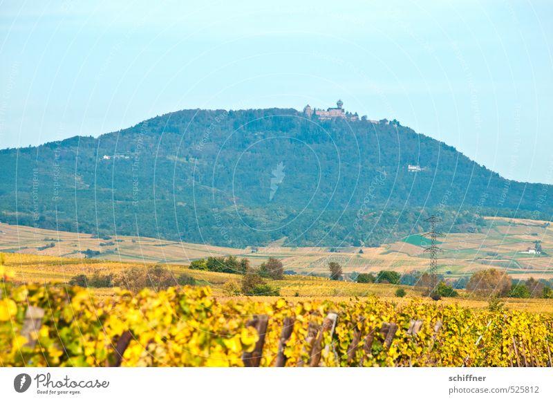 Château du Haut-Kœnigsbourg Landschaft Himmel Herbst Pflanze Baum Feld Wald Hügel Berge u. Gebirge Klischee blau gelb Burg oder Schloss Vogesen erhaben