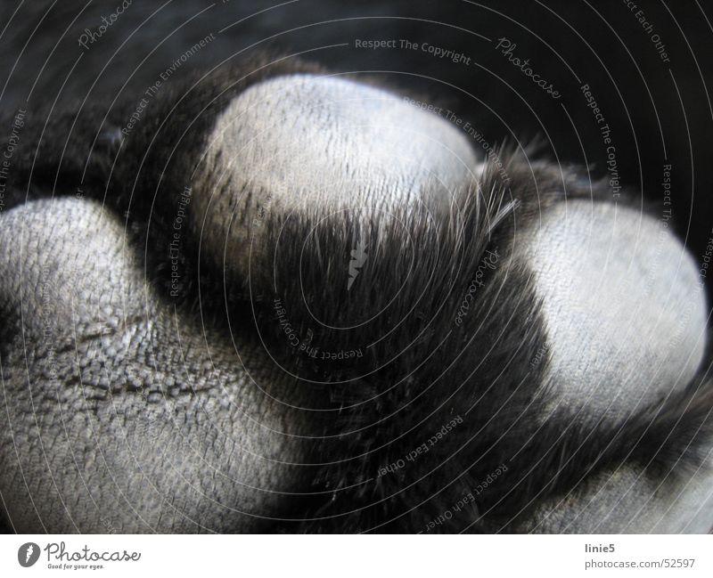 was mag das wohl sein? Natur schwarz Tier Haare & Frisuren grau Hund Fell Pfote Labrador