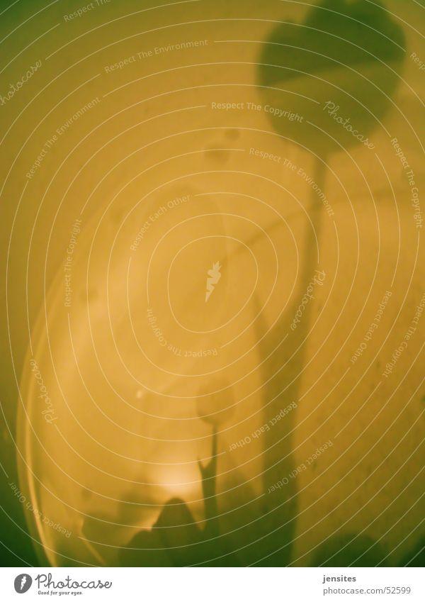 Rosenwasser Blume Reflexion & Spiegelung gelb Licht Pflanze vervielfältigen Blumenstengel Stil grau Natur planen Schatten Wasser Schalen & Schüsseln flower