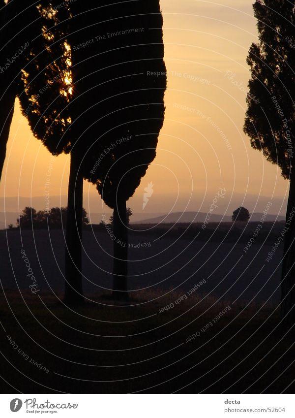 Toscana um 5 Baum Sonne Toskana