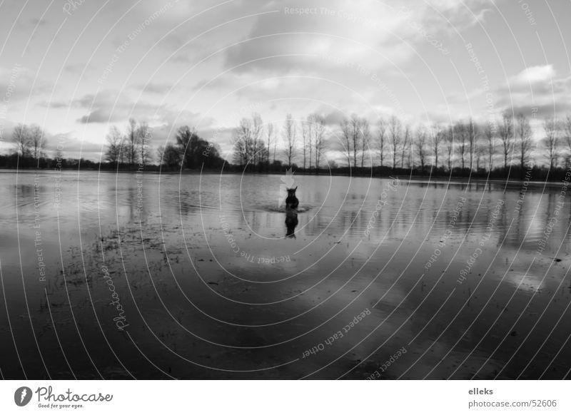 Wasserhund Wasser Himmel weiß schwarz Wolken Ferne kalt Wiese Hund Spiegel Angriff Monochrom Brandenburg Spreewald