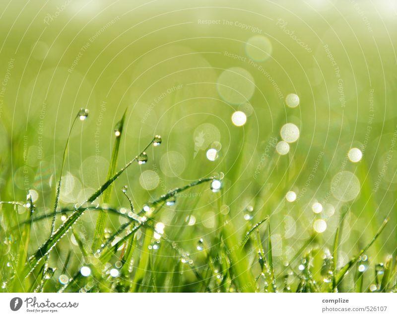 saftige Wiese Garten Umwelt Natur Pflanze Urelemente Wasser Wassertropfen Sonne Klima Schönes Wetter Regen Gras Sträucher Grünpflanze Park Feld glänzend Halm