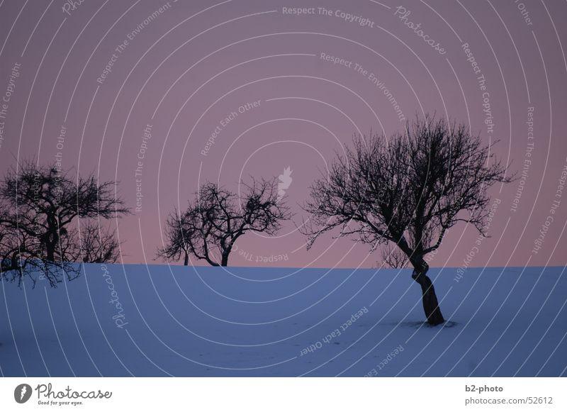 winterbäume Himmel Baum blau rot Winter kalt Schnee Landschaft Frost Ast Baumstamm Zweig Pastellton Obstbaum
