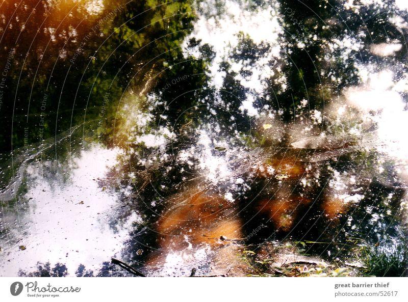 Pollution Wasser Baum Farbe Erdöl Teich Pfütze