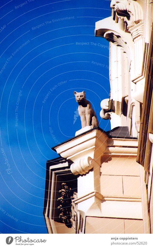 Kitty watch Katze Jugendstil Lettland Riga Himmel Statue gebaude blue blau sky cat Architektur
