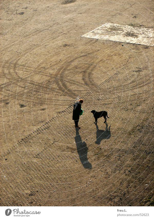 braver Hund Plastiktüte Frau Platz Freundschaft alt Haustier Tier Reifenspuren rothaarig Säugetier Pelzkragen Schatten mit dem hund rausgehen leckerlie
