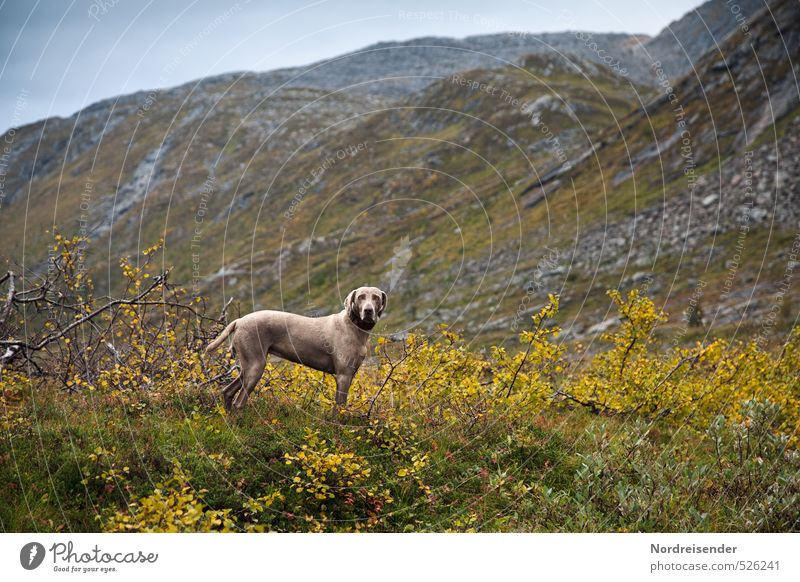 Aufgehen Hund Pflanze Landschaft Tier Ferne Berge u. Gebirge Freiheit Wetter Regen elegant wandern beobachten Fitness Abenteuer Neugier Vertrauen