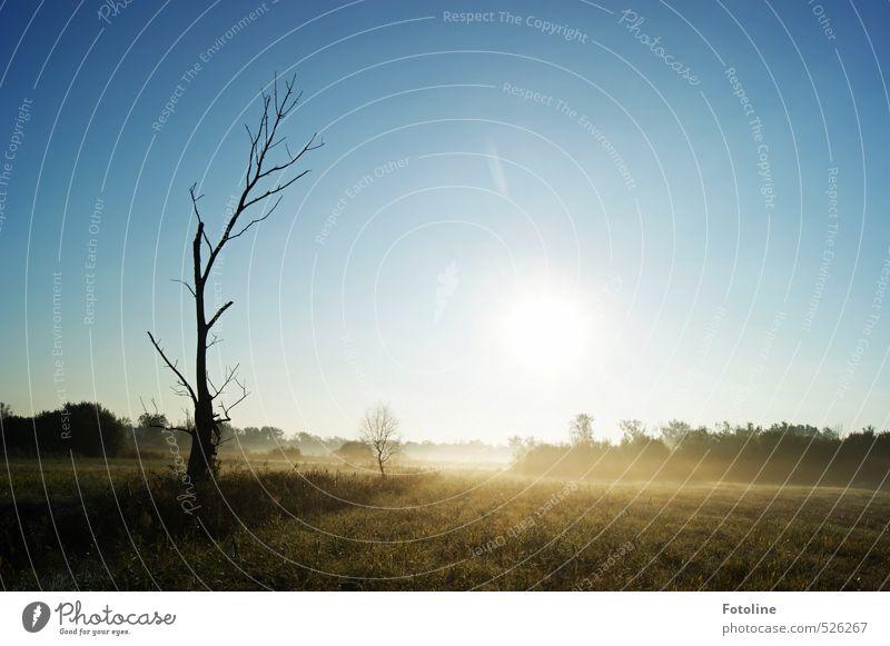 777   jetzt wirds frostig Umwelt Natur Landschaft Pflanze Himmel Wolkenloser Himmel Sonne Herbst Baum Wiese Feld hell kalt natürlich blau schwarz weiß Farbfoto