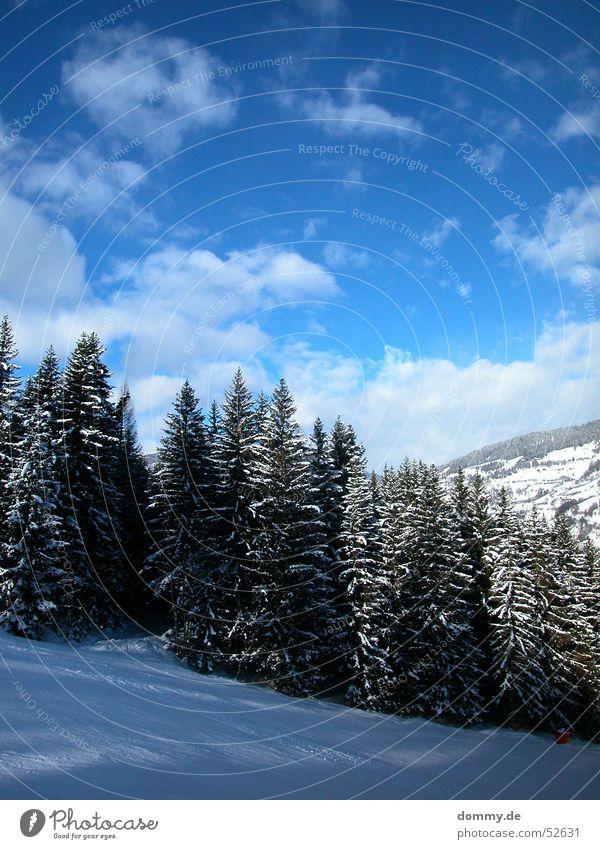 skiheil Skier fahren weiß Wolken steil Tanne Baum Österreich Bundesland Steiermark Berg Kreischberg blau Himmel Sonne Skipiste Schnee