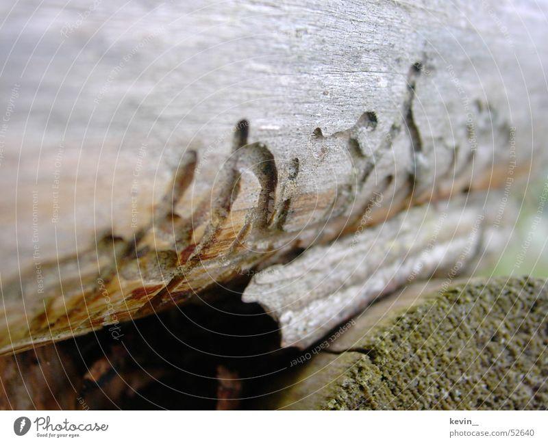 Holzwurmwohnung Natur Wurm
