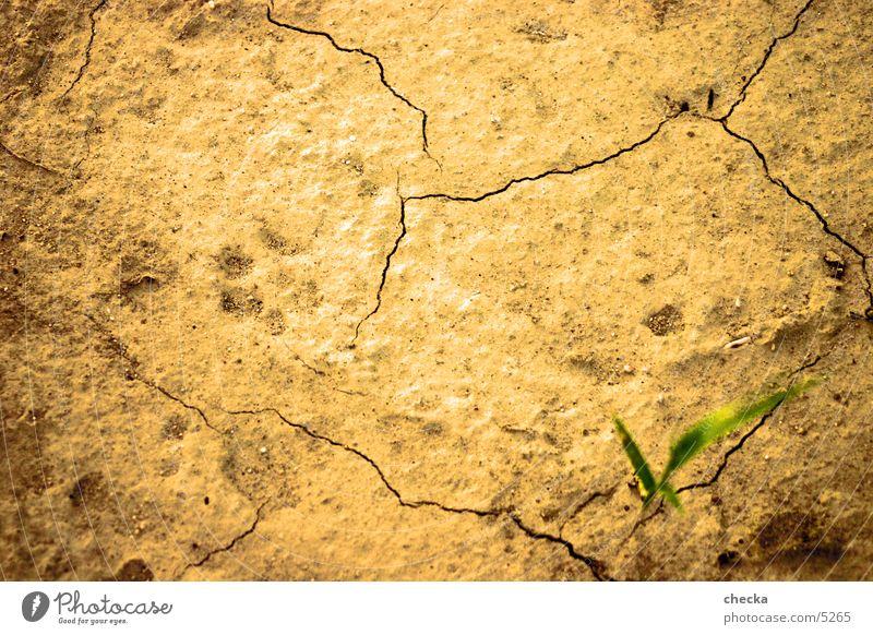 wüstenboden trocken Ödland Untergrund Wüste Erde Bodenbelag Riss