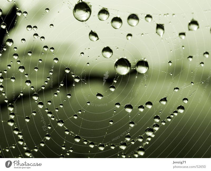Morgentau. Wasser Herbst Regen Nebel Wassertropfen Seil Netz Spinne Spinnennetz