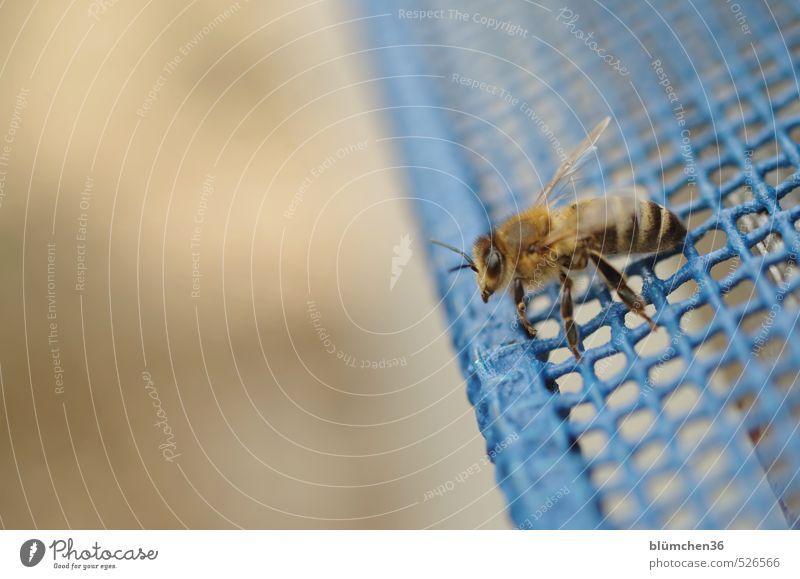 Start in den Frühling Tier Nutztier Biene Honigbiene Insekt Arbeit & Erwerbstätigkeit fliegen tragen ästhetisch klein schön Tierliebe Tierlaute Frühlingsgefühle