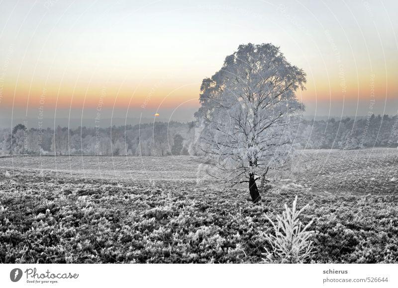 Winterzauber Umwelt Natur Landschaft Pflanze Himmel Wolkenloser Himmel Horizont Sonnenaufgang Sonnenuntergang Wetter Eis Frost Schnee Baum Wald Hügel träumen