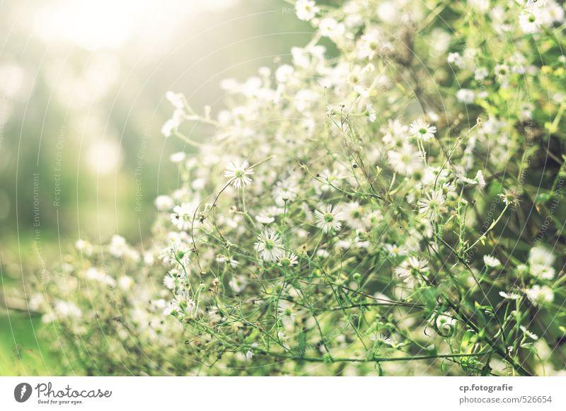 Lichtgestalten Natur grün Pflanze Sommer Blume Wärme Herbst Garten Park Schönes Wetter Duft positiv Grünpflanze Wildpflanze
