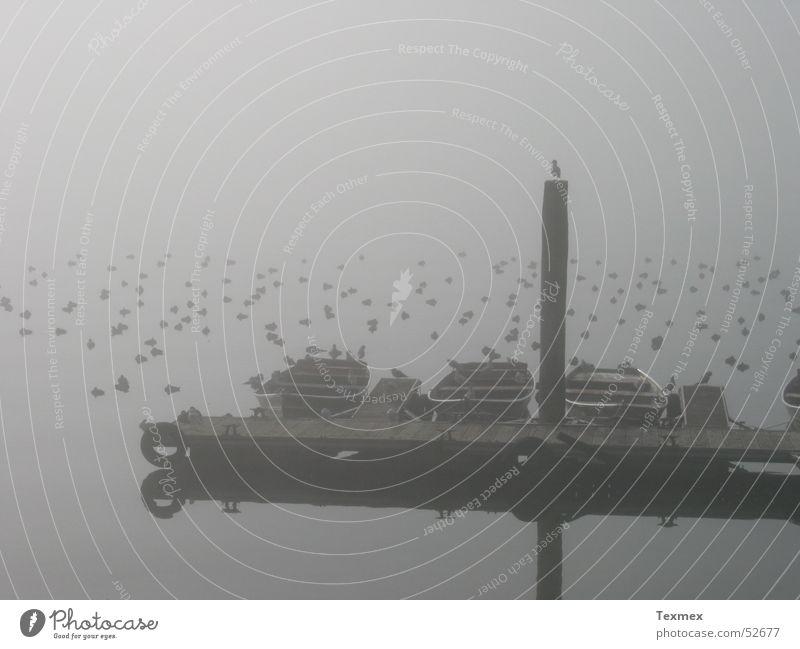 Still ruht der See ruhig Einsamkeit Herbst Wasserfahrzeug Nebel Trauer trist Monochrom Möwenvögel