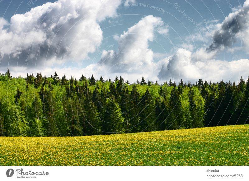 wiesewaldwolken Natur Wolken Wald Wiese Landschaft Baden-Württemberg Schwäbische Alb