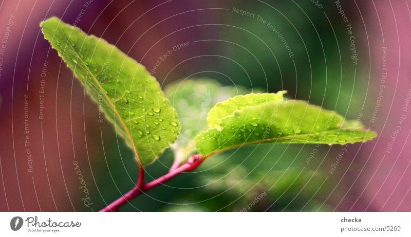 Frisch grün Pflanze Blatt Wassertropfen