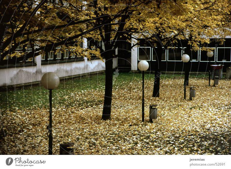 Herbstbeginn Baum Blatt gelb Lampe dunkel Schule groß