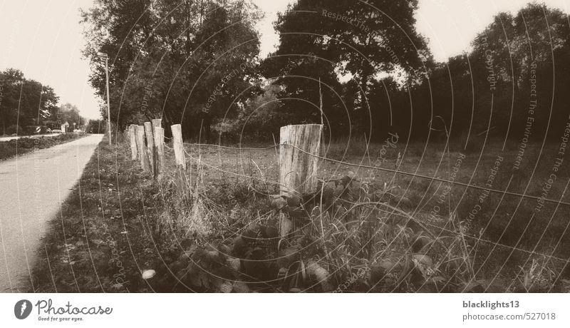 Zaun am Straßenrand Schwarzweißfoto Landschaft alt abstrakt Natur grau Baum Traurigkeit Kunst Menschenleer Gras Balken Drahtzaun Weide Fotografie Landweg Dorf