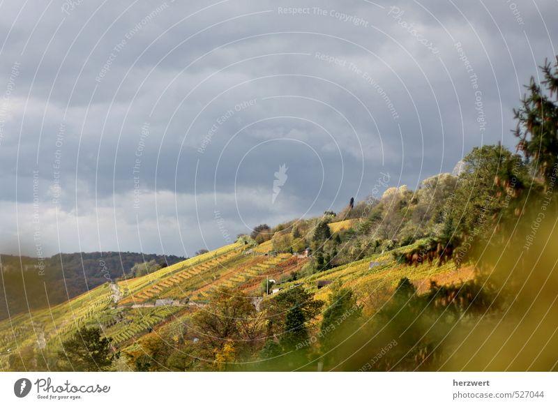 Die Farben des Herbstes Natur Landschaft ruhig Herbstfarben Sichtweise Ferne Aussicht Außenaufnahme Panorama (Aussicht)