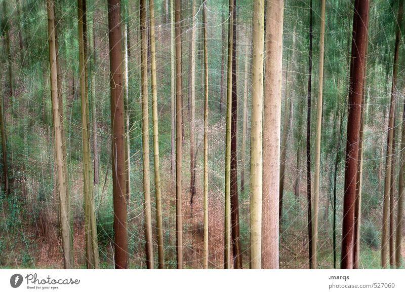 Stammbäume Natur schön Sommer Landschaft Wald Umwelt Leben Herbst außergewöhnlich Lifestyle groß verrückt Ausflug Vergänglichkeit Wandel & Veränderung Nadelbaum
