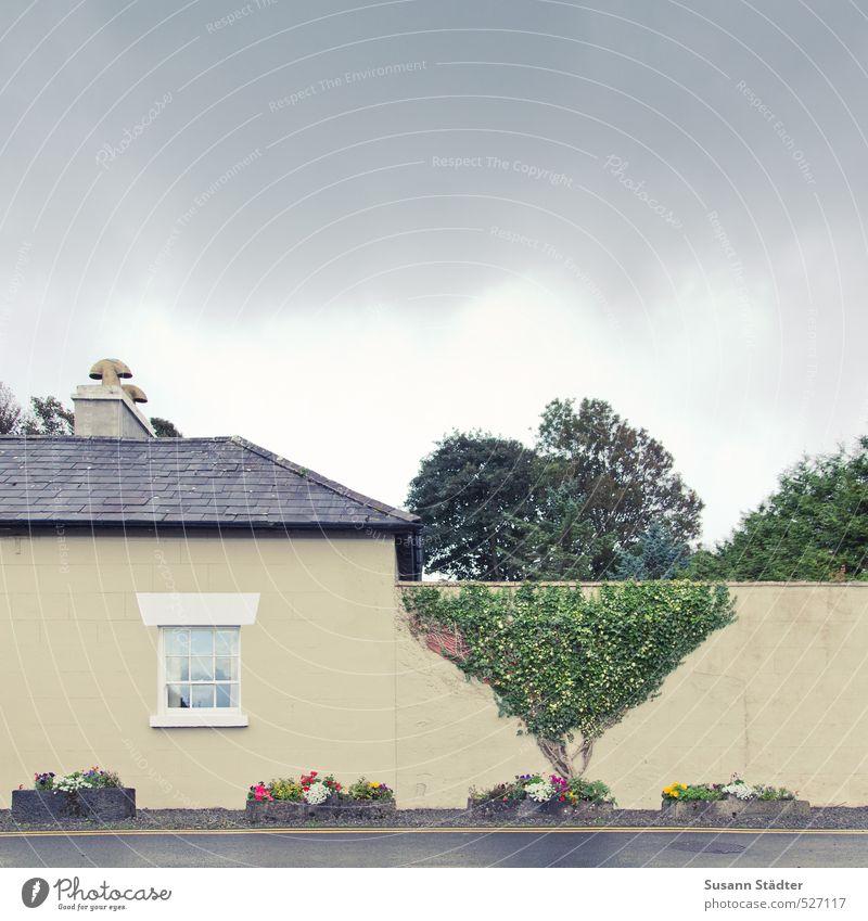 Alles nur Fassade | Irland Himmel Frühling Pflanze Baum Efeu Mauer Wand außergewöhnlich hoch Phantasie Baumkrone Fassadenbegrünung Wohnhaus Fenster Straße