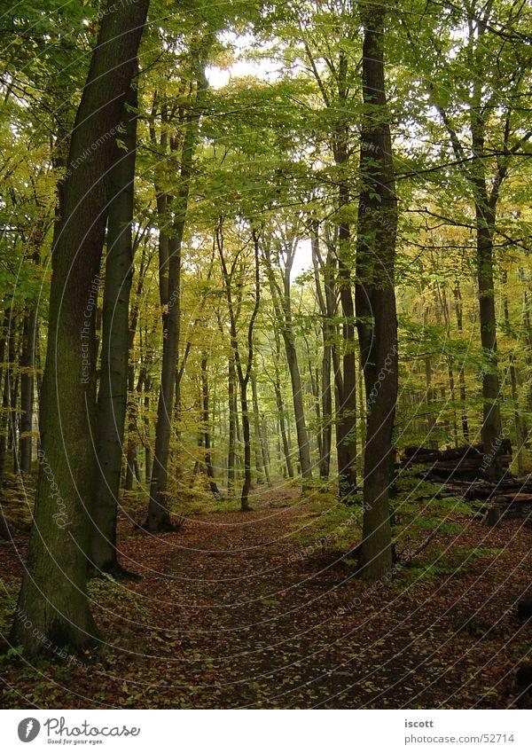 in den wald Baum Blatt Wald Herbst Wege & Pfade Fußweg Waldlichtung
