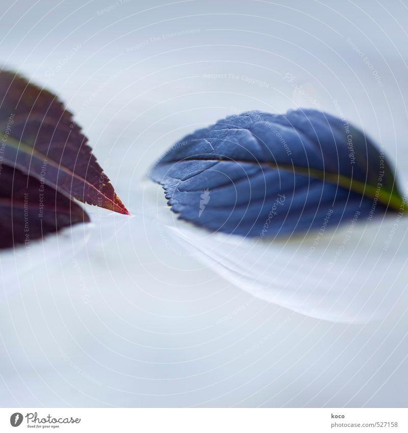 Zuneigung. Natur blau grün weiß Wasser Sommer Pflanze rot Blatt Liebe Herbst Frühling natürlich liegen träumen glänzend