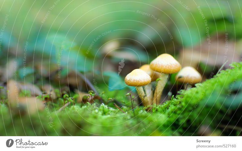 Autumn fairy tale... Natur Pflanze ruhig Wald Leben Herbst Zusammensein Idylle Erde Vergänglichkeit Schutz Gelassenheit Zusammenhalt Moos Geborgenheit Pilz