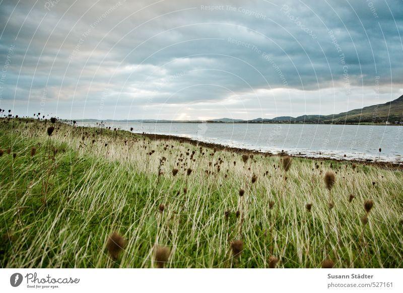 Irland   Croagh Patrick Landschaft Sträucher Blüte Grünpflanze Wiese Feld Küste Seeufer Ferne Unendlichkeit Republik Irland Wind Wolken Farbfoto Außenaufnahme