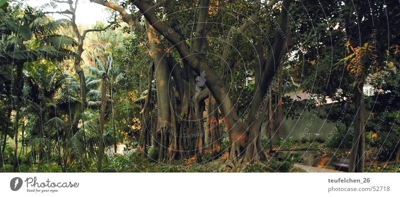 Ein Park in Lissabon Baum Wald Urwald