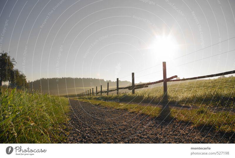 Mornin Umwelt Natur Landschaft Erde Luft Wassertropfen Wolkenloser Himmel Herbst Wetter Schönes Wetter Nebel Baum Gras Sträucher Weidezaun Fußweg Stein Holz