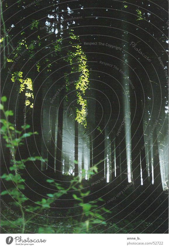 Mornig has broken Natur alt Baum ruhig Blatt Wald Leben dunkel kalt Erholung Herbst Bewegung Freiheit träumen Denken Wärme