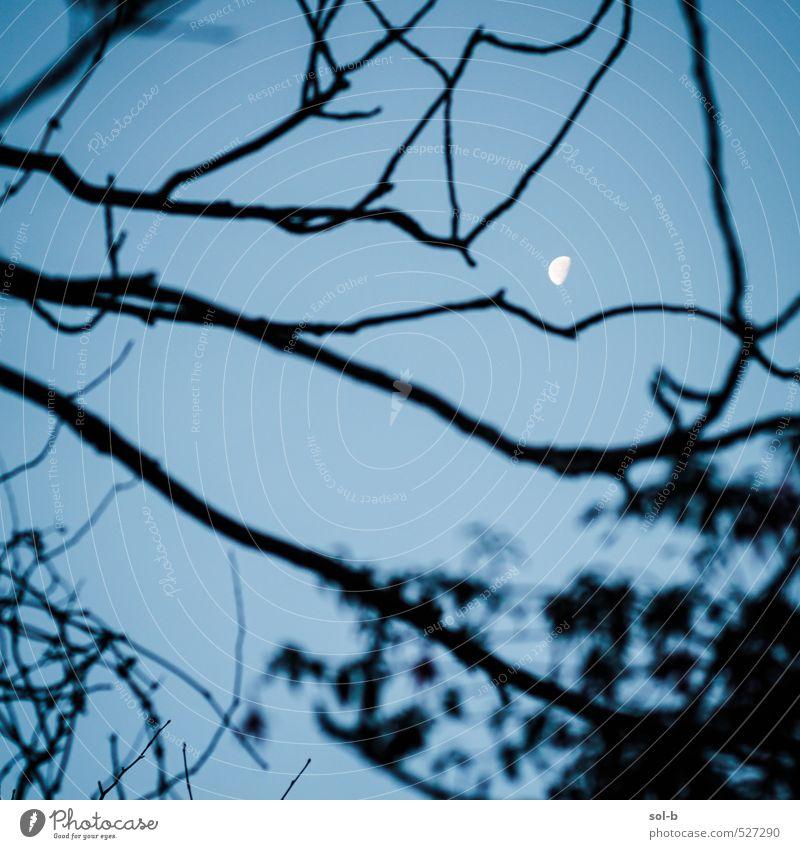 Himmel Natur Baum Winter Ferne dunkel kalt Herbst oben natürlich Garten träumen Luft Park wild leuchten