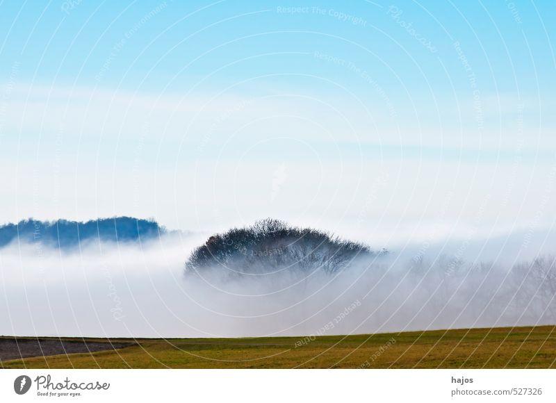 Nebelschwaden im Herbst Natur Landschaft Wetter Wiese Feld Wald blau Nebelbank feucht Dunst Himmel Hochebene Schwäbische Alb Biosphärenreservat Jahreszeiten