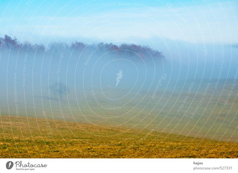 Nebelschwaden im Herbst Natur Landschaft Wetter Wiese Feld Wald blau gelb grau Stimmung Nebelbank feucht Dunst Himmel Hochebene Schwäbische Alb
