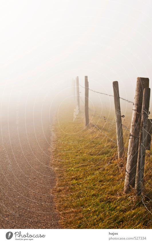 Nebelschwaden am Weg Natur Landschaft Herbst Wetter Wege & Pfade weiß geheimnisvoll Hoffnung Horizont Neugier Schutz Wandel & Veränderung Nebelbank feucht Dunst