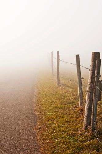 Nebelschwaden am Weg Natur weiß Landschaft Herbst Wege & Pfade Horizont Wetter Wandel & Veränderung Schutz Hoffnung Neugier Jahreszeiten geheimnisvoll Zaun
