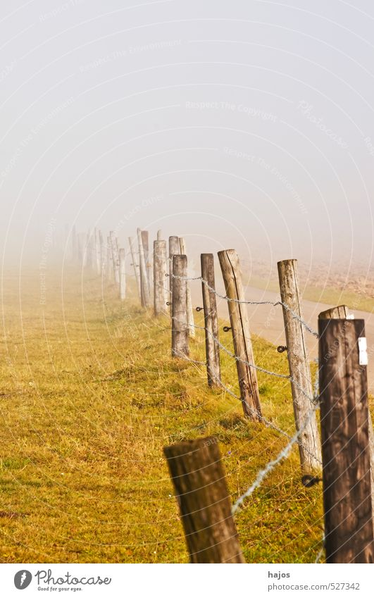 Nebelschwaden am Weg Natur Landschaft Herbst Wetter Wege & Pfade kalt gelb grün weiß Nebelbank feucht Dunst Hochebene Zaun Weide Sicht null mystisch