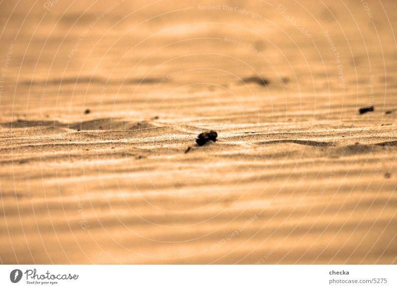 wüste Strand Sand Wüste sandboden