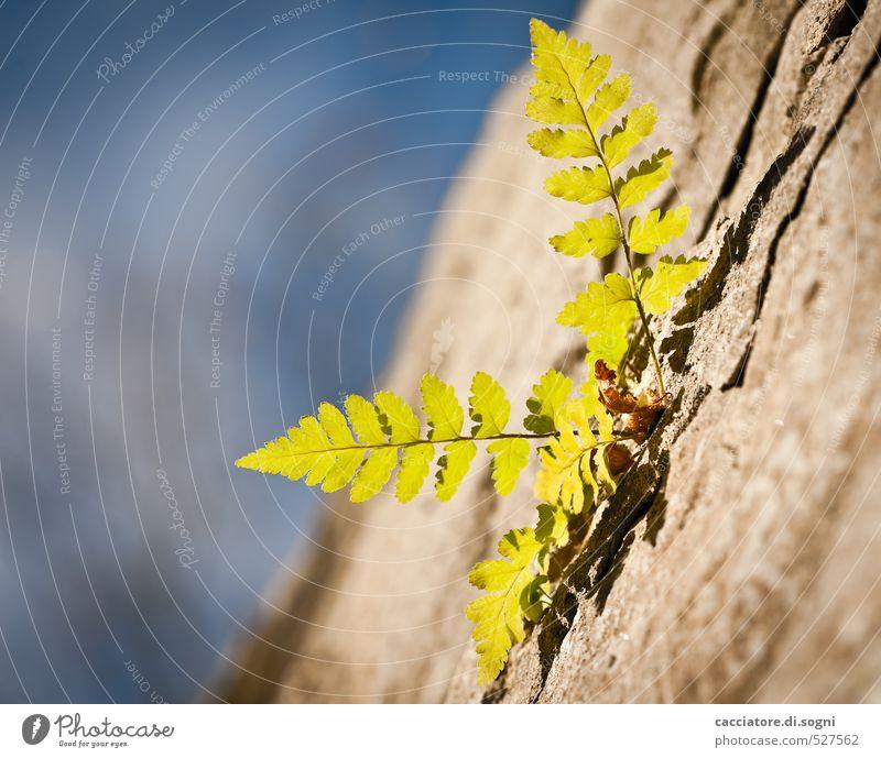 Spätherbst Himmel blau grün Pflanze Einsamkeit Umwelt Wand Herbst Mauer Freiheit klein Glück natürlich braun Kraft Erfolg