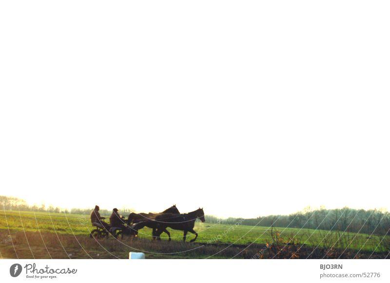 ein Nachmittag im Januar Pferd Pferdekutsche Rennbahn Freitag Baum Wiese Kutscher Reitsport Sport-Training Kreis Warendorf westfalen münsterland Landschaft