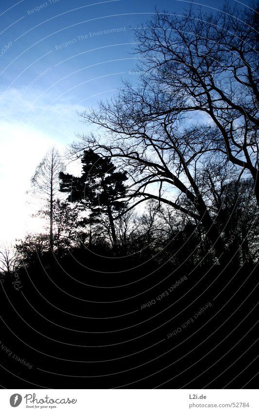 skeleton of nature Baum Wolken Herbst Winter Wald Holz laublos weiß schwarz Himmel Sonne Natur Ast blau hell dubkel Schatten