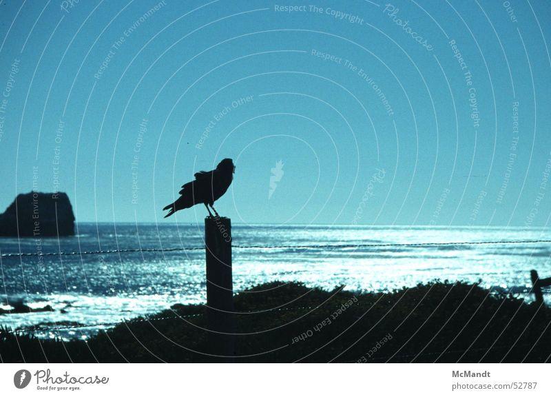 Meeresvogel Vogel Küste Gegenlicht Kalifornien Zaun USA bird sea coast Felsen fence