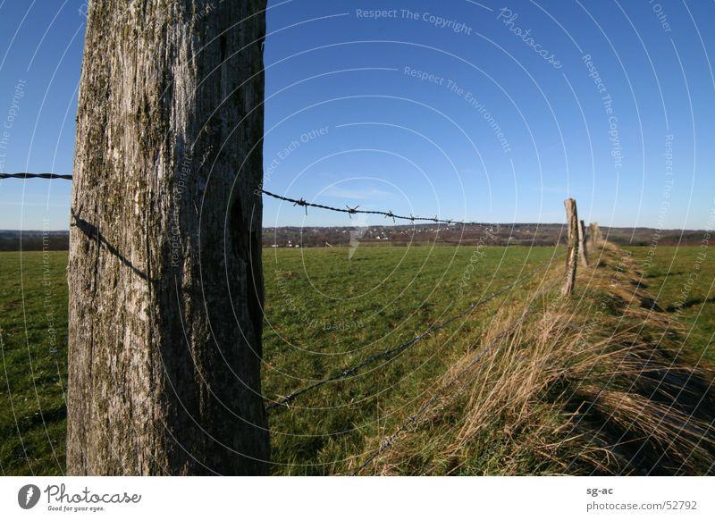 Zaunpfahl grün blau Wiese Gras Holz Weide Zaun Blauer Himmel Vieh Stacheldraht Eifel Mittelgebirge Weidezaun