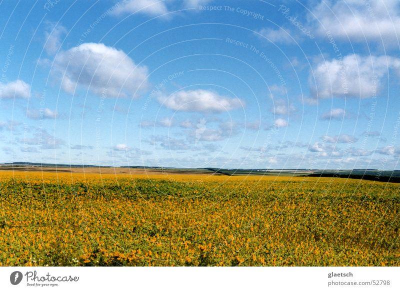 Blumenwiese Himmel Blume blau Wolken Wiese Horizont