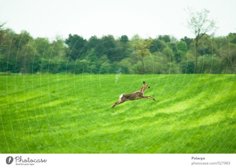 Himmel Natur grün Sommer Landschaft Tier Wald Leben Wiese Gras Essen springen braun Park wild frei