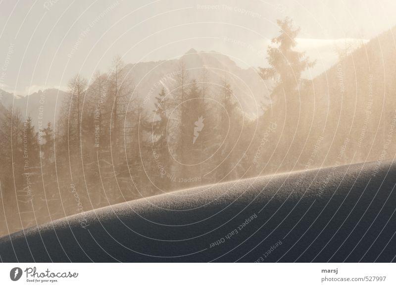 Schneegestöber II Natur Sonne Winter Schönes Wetter Eis Frost Schneefall Berge u. Gebirge Schneelandschaft kalt Farbfoto Gedeckte Farben Außenaufnahme