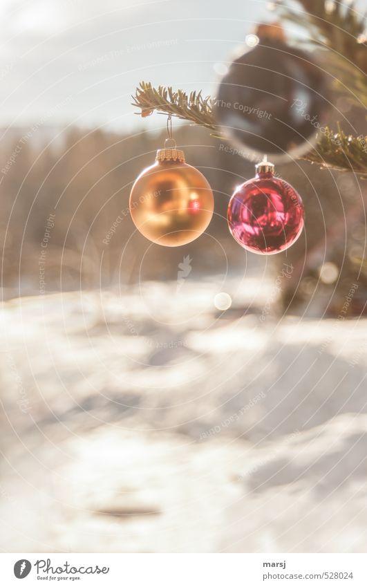 Die drei OOO Natur Weihnachten & Advent rot Erholung Landschaft Winter Glück Feste & Feiern Stimmung glänzend gold Häusliches Leben leuchten Schönes Wetter